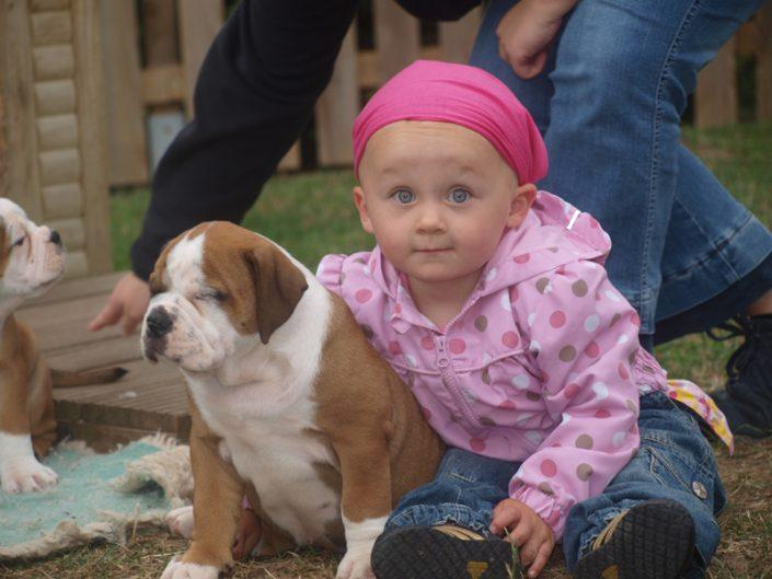 Krippenkind mit Continental Bulldog