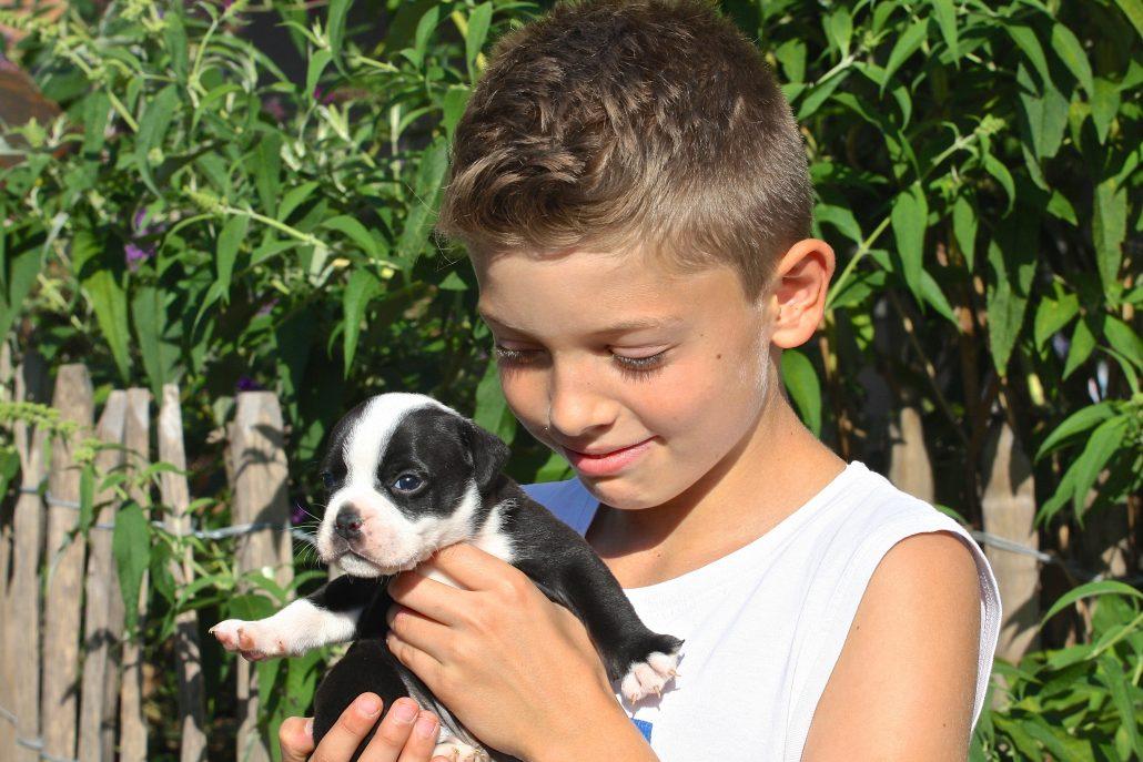 Junge mit Continental Bulldog Welpe