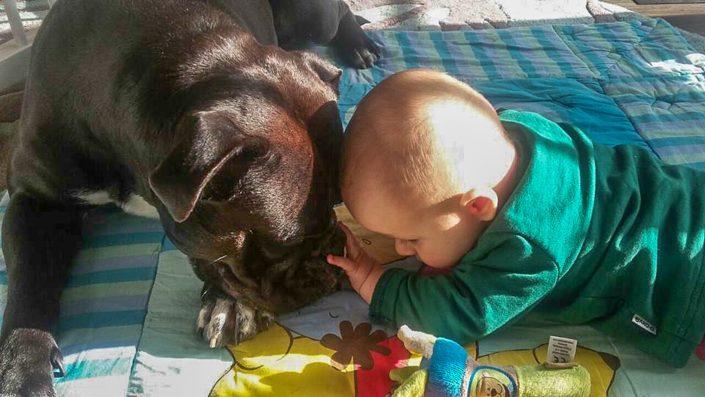 Baby mit Continental Bulldog