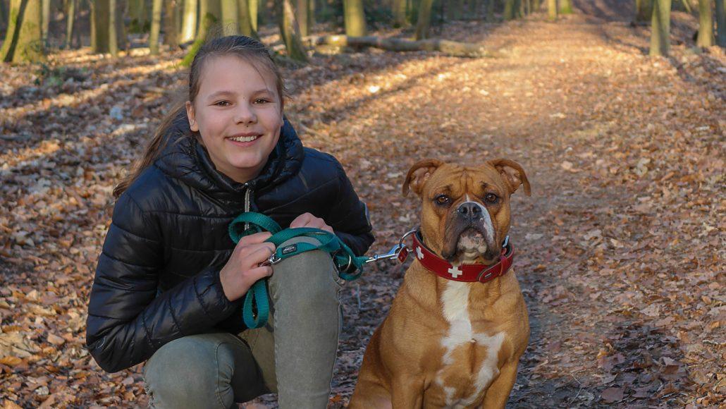 Continental Bulldog mit Mädchen an der Leine